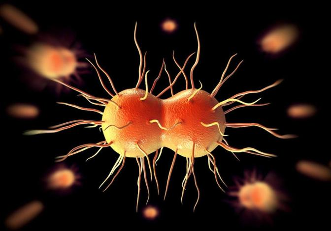 Nearly Untreatable Gonorrhea Globally on the Rise